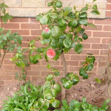 Rehoming Plants