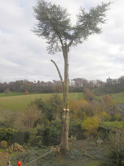 A Day in the Life of a Tree Surgeon - Chestnut Trees - Tree ...