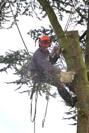 tree surgeon removing top branches