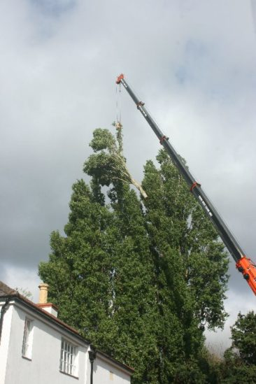 The crane lifts large branches safely to the ground