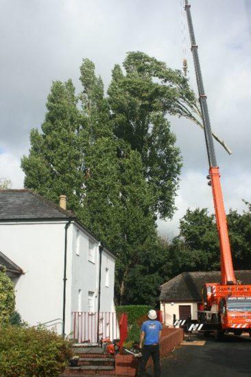 crane lifting tree branch