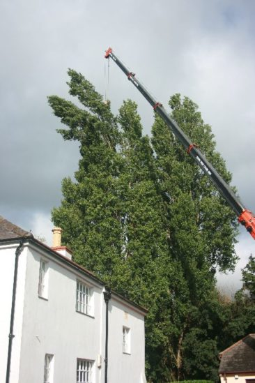 tree surgery at exeter quay