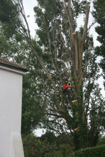 Crane removing tree section