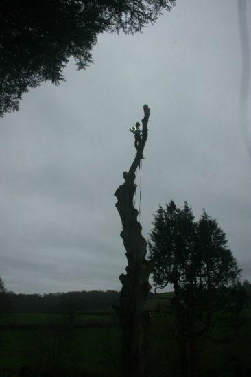 tree surgery in newton abbot
