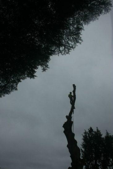 tree surgery in wolborough, newton abbot