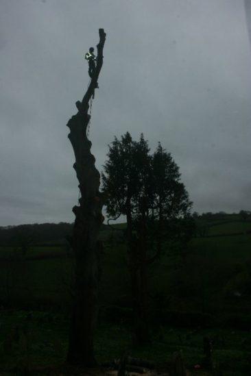 Dismantling a tree at wolborough