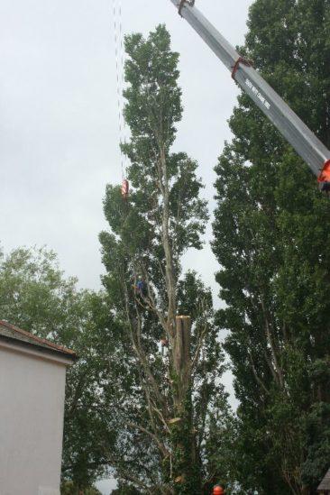tree surgeon dismantles half of the tree