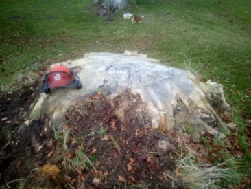 stump grinding - top removed