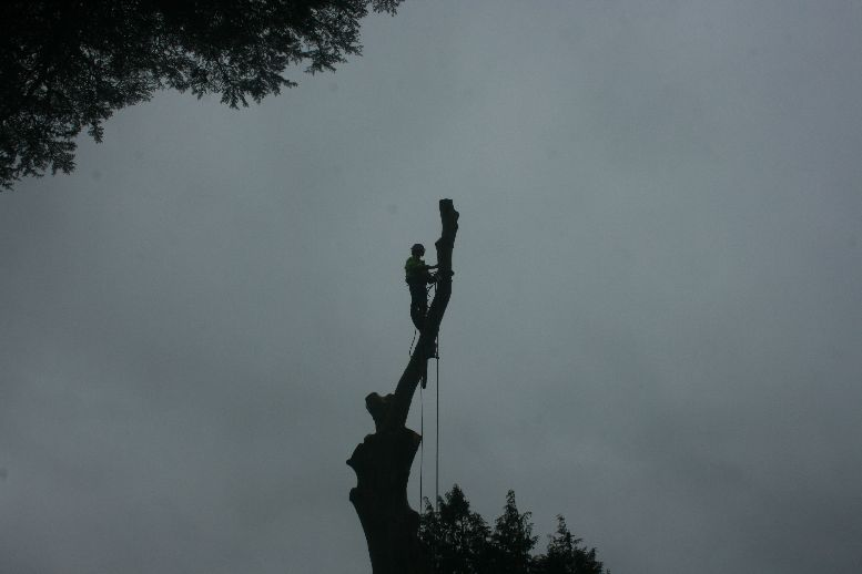 Tree Surgery in Newton Abbot