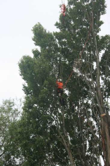 tree surgery in exeter