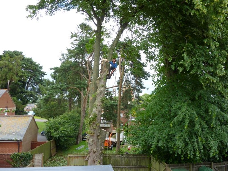 Tree Surgery in Sowton, Exeter