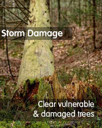 storm damage exeter devon