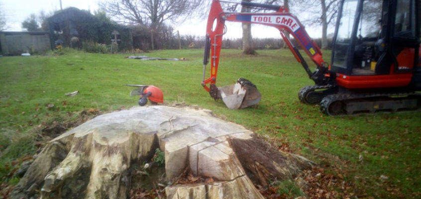 Stump Grinding in Cheriton Bishop, Devon