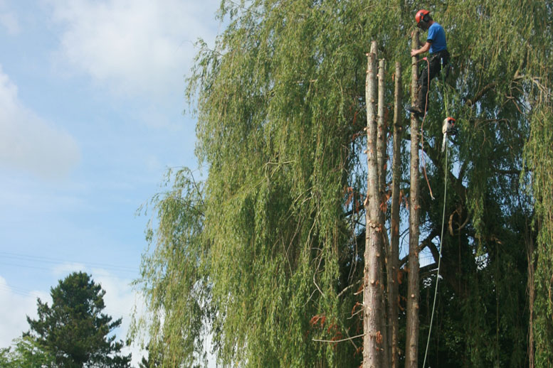 Tree Surgeon Removes Dead Tree