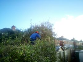 Hedge reduction nearing completion