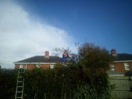 hedge work and garden maintenance
