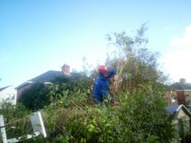 hedge work - Tree surgeon trimming hedge